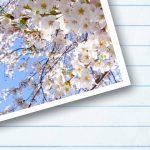 新学期のシーズン桜